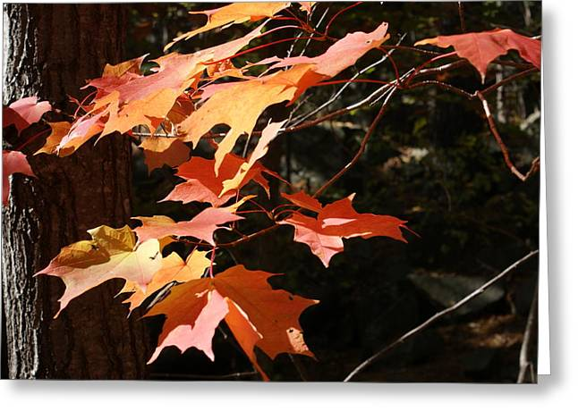Greeting Card featuring the photograph Autumn Leaves by Ron Read