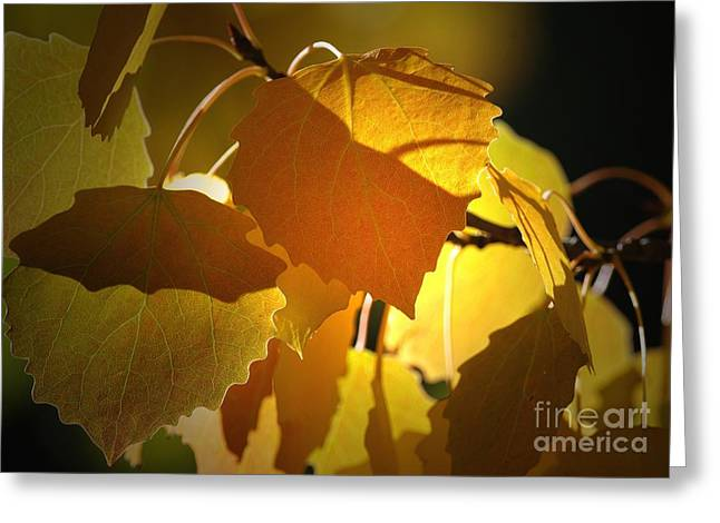 Autumn Leaves Greeting Card by Sharon Talson