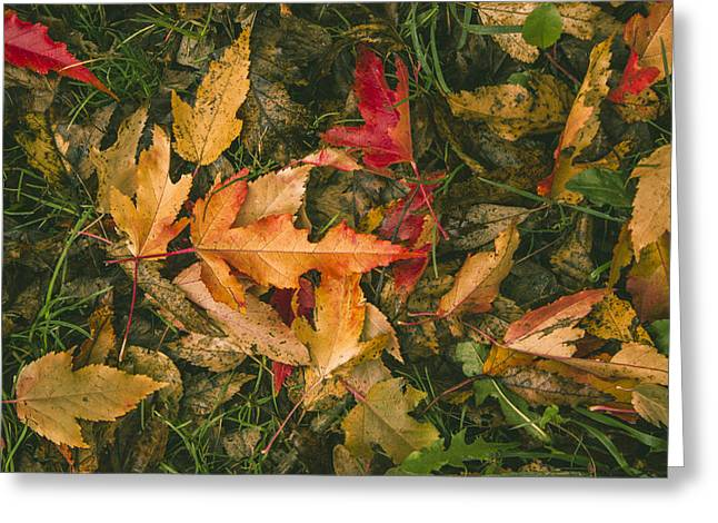 Autumn Leaves Greeting Card by Thubakabra