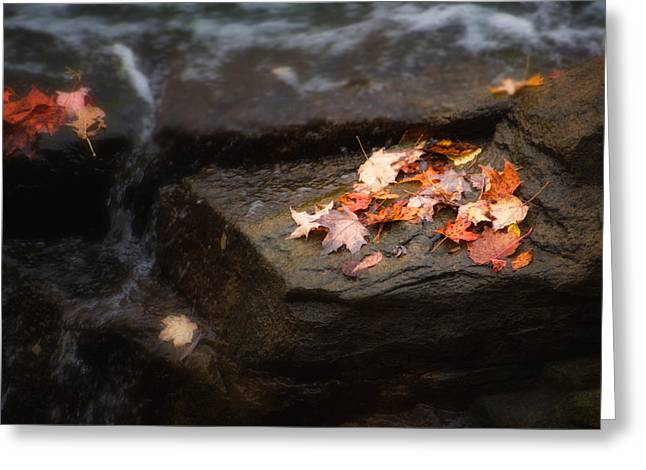 Autumn Leaves Greeting Card by Tom Mc Nemar