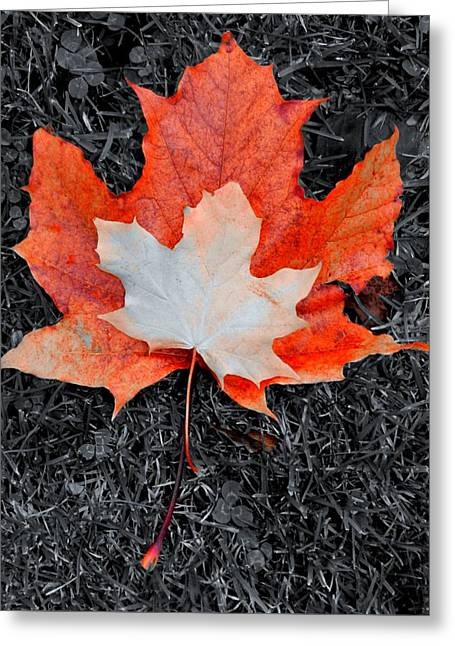Autumn Leaves Two #3 Greeting Card by Nik Watt