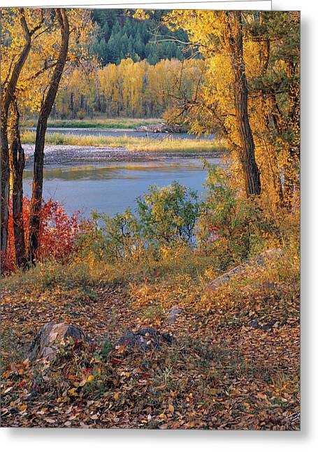 Autumn Greeting Card by Leland D Howard
