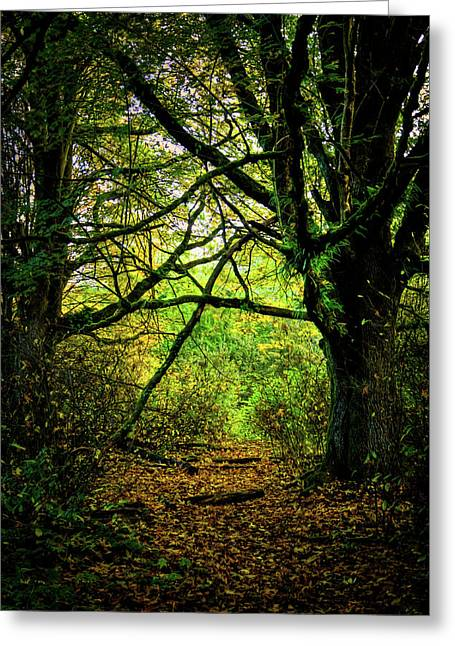 Greeting Card featuring the photograph Autumn Light by David Patterson
