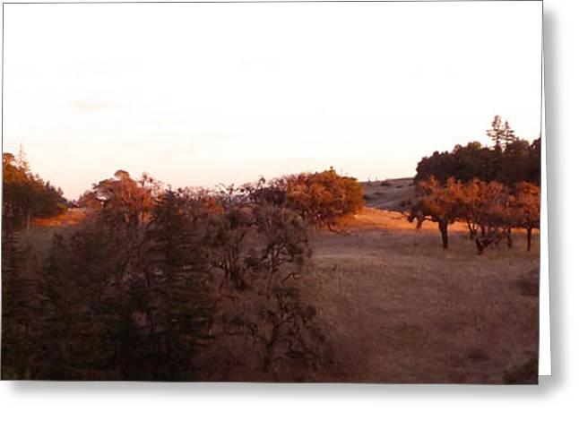 Autumn Light Greeting Card by JoAnn SkyWatcher
