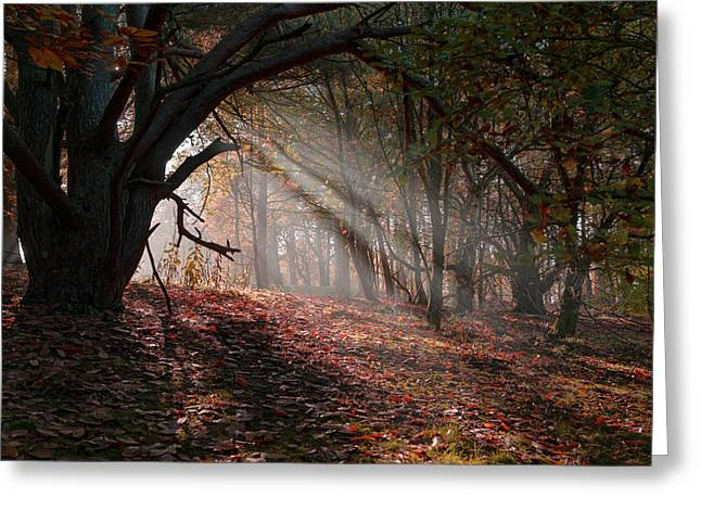 Greeting Card featuring the photograph Autumn Light  by Scott Carruthers