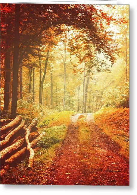 Autumn Lights Greeting Card