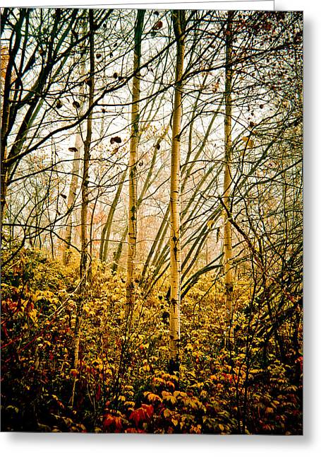 autumn Lines Greeting Card by Maggie Terlecki