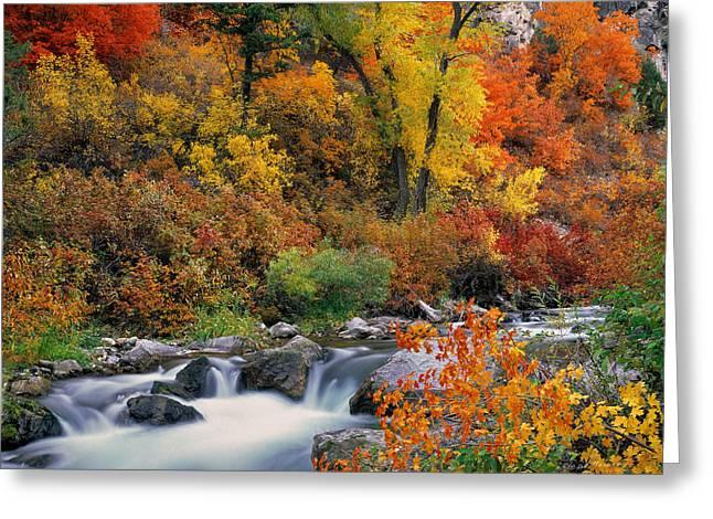 Autumn Magic Greeting Card by Leland D Howard