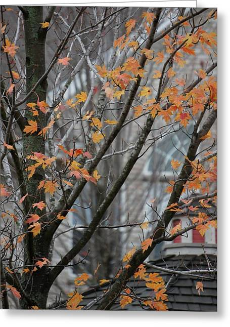 Autumn Maple Leaves  Greeting Card by Art Spectrum