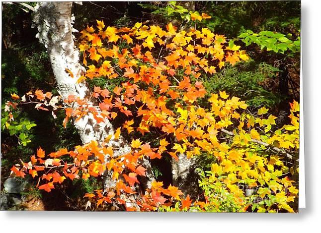Autumn Maple Greeting Card