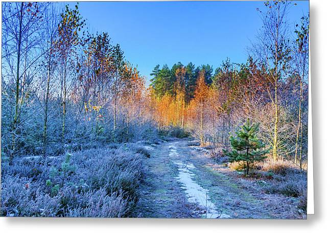 Autumn Meets Winter Greeting Card by Dmytro Korol