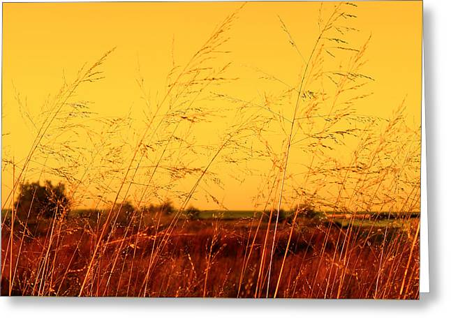 Greeting Card featuring the photograph Autumn by Milena Ilieva