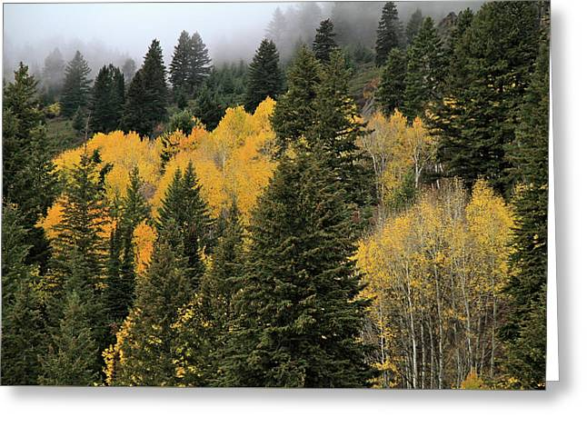 Autumn Mist, Owyhee Mountains Greeting Card