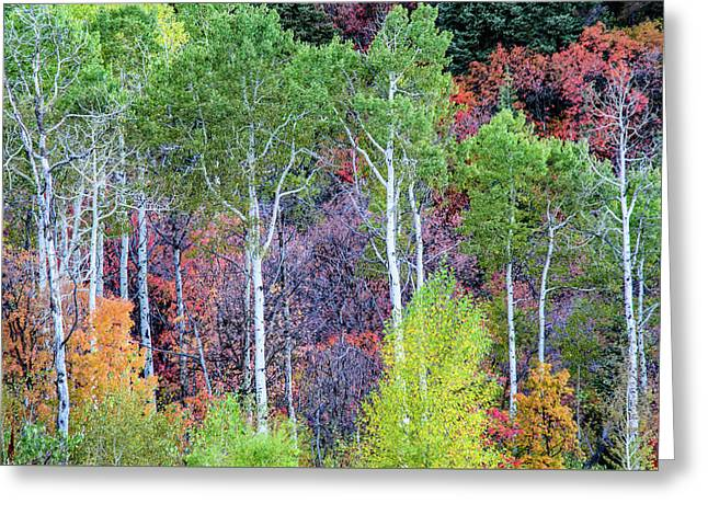Autumn Mix Greeting Card