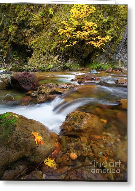 Greeting Card featuring the photograph Autumn Moment by Mike Dawson