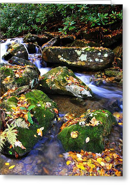 Autumn Monongahela National Forest Greeting Card by Thomas R Fletcher