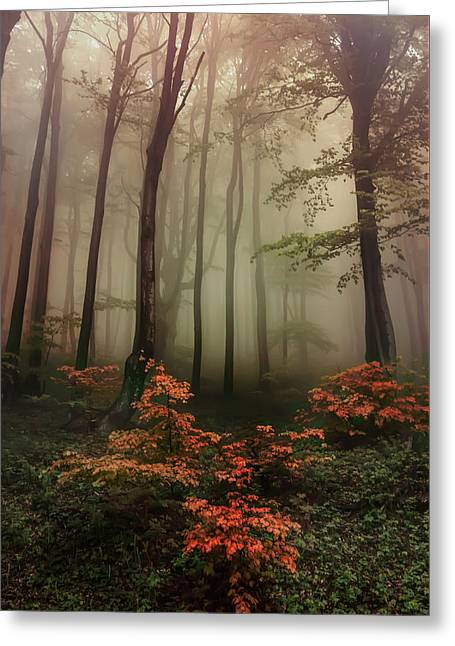 Autumn Mornin In Forgotten Forest Greeting Card
