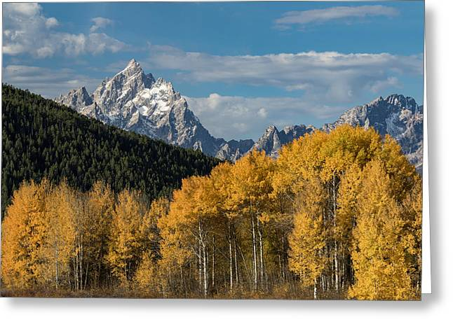 Autumn Morning Greeting Card by Andrew Wells