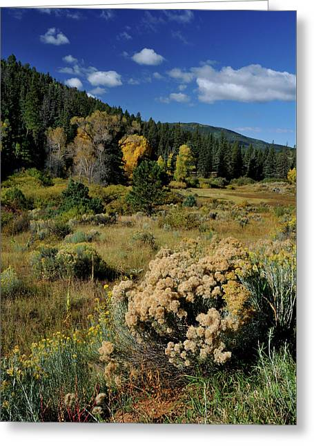 Greeting Card featuring the photograph Autumn Morning In The Canyon by Ron Cline