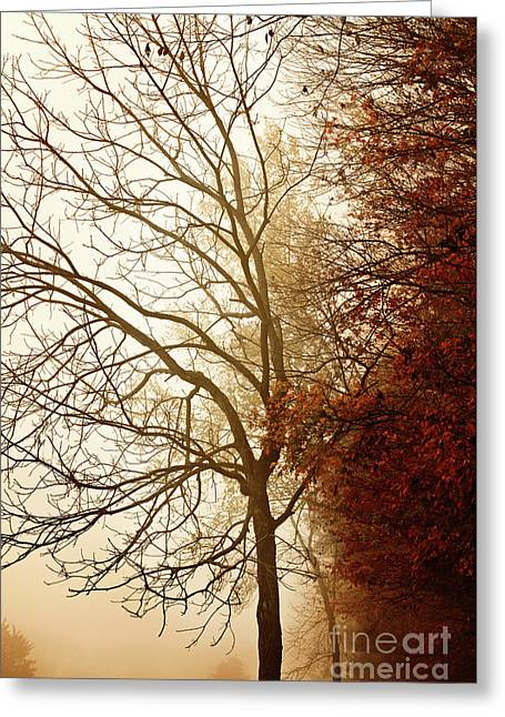 Greeting Card featuring the photograph Autumn Morning by Stephanie Frey