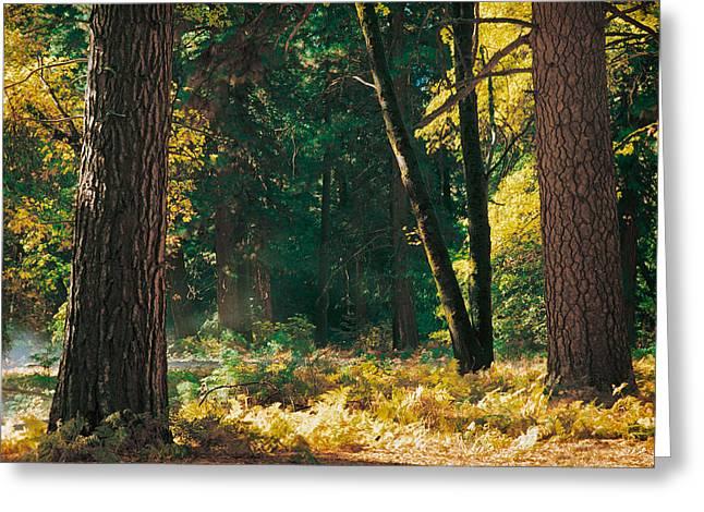 Autumn Morning Yosemite National Park Greeting Card by Edward Mendes