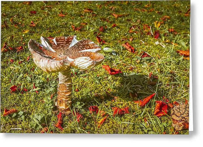 Autumn Mushroom Greeting Card