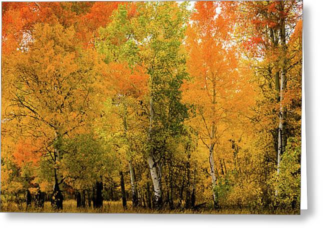 Autumn Near The Snake River Greeting Card