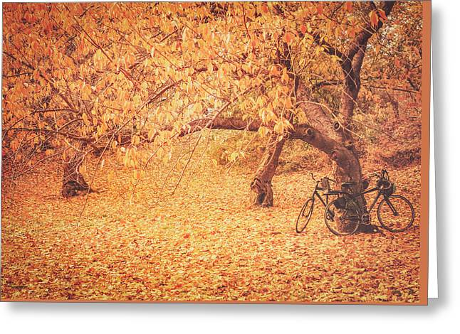 Autumn - New York City Greeting Card by Vivienne Gucwa