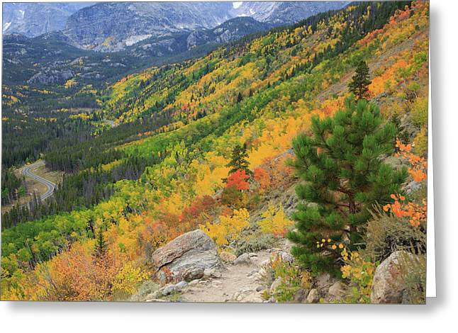 Greeting Card featuring the photograph Autumn On Bierstadt Trail by David Chandler