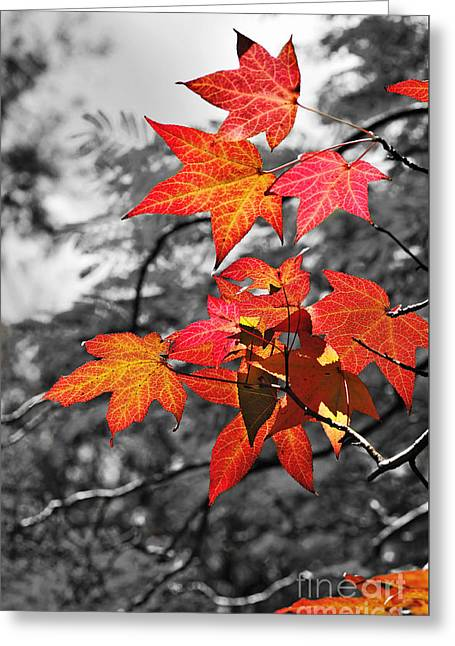Autumn On Black And White Greeting Card by Kaye Menner