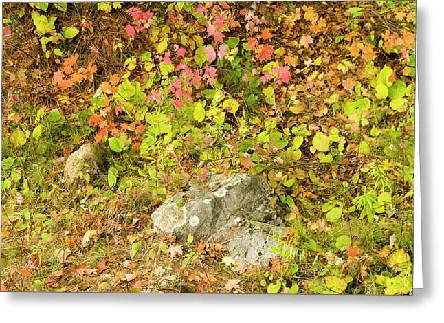 Autumn On Pink Lake 5 Greeting Card