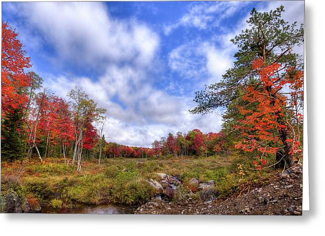 Greeting Card featuring the photograph Autumn On The Stream by David Patterson