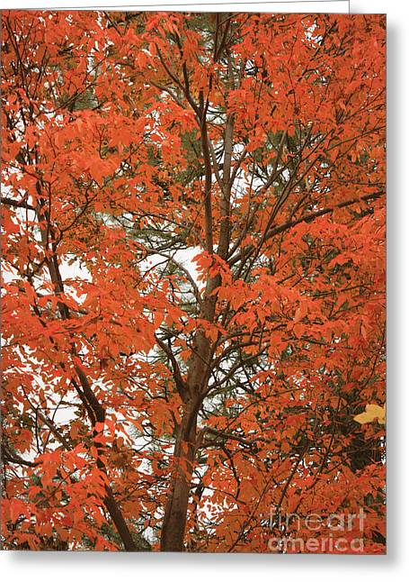 Autumn Orange - Digital Greeting Card by Carol Groenen