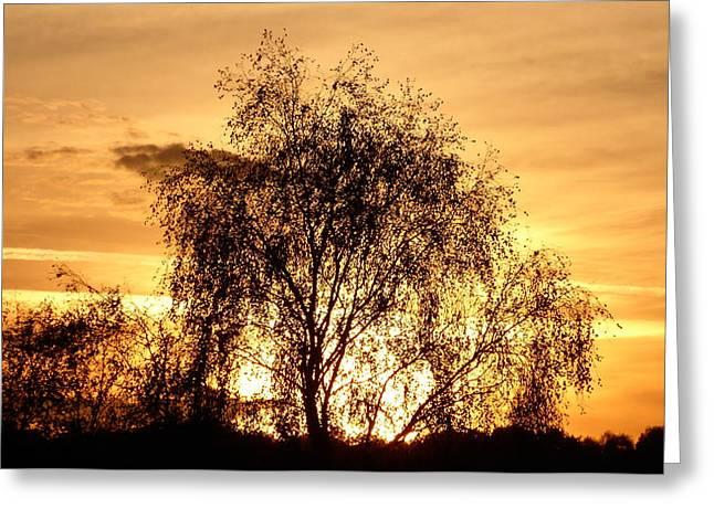Autumn Orange Setting Sun Behind Tree Silhouette Greeting Card