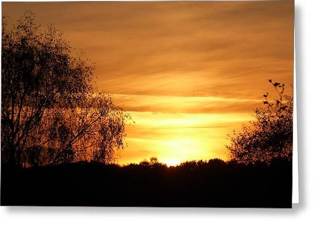 Autumn Orange Sunset Sky Between Tree Silhouettes Greeting Card