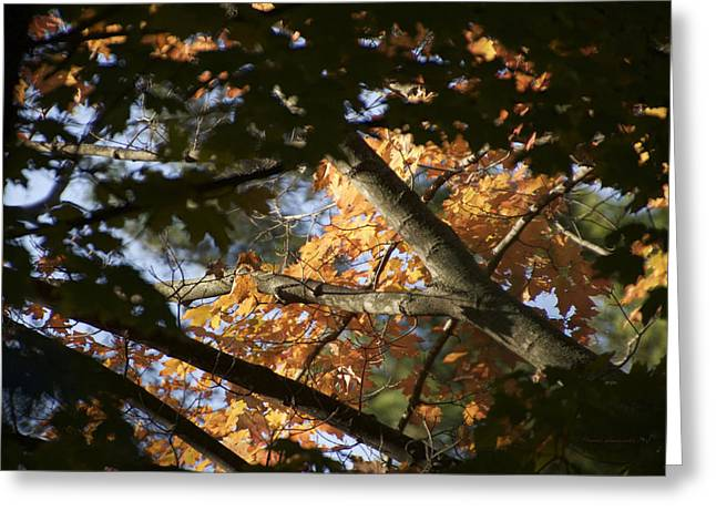 Autumn Orange Trees 2015 Greeting Card by Thomas Woolworth