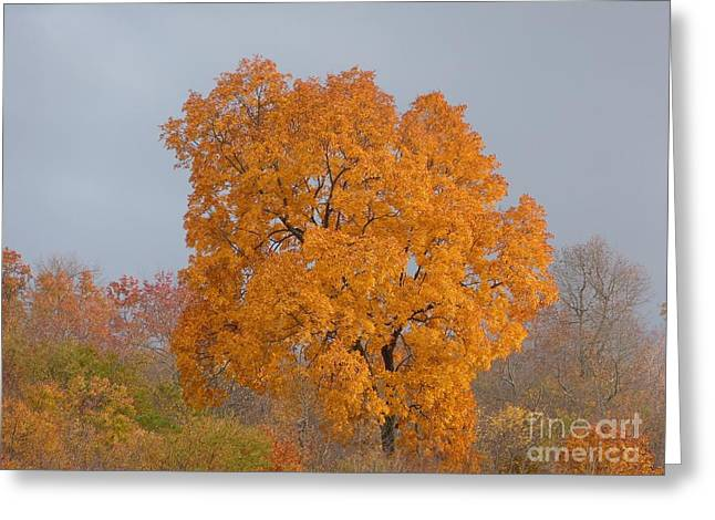 Autumn Over Prettyboy Greeting Card