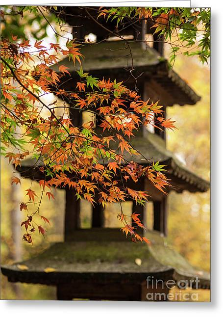 Autumn Pagoda Greeting Card by Mike Reid