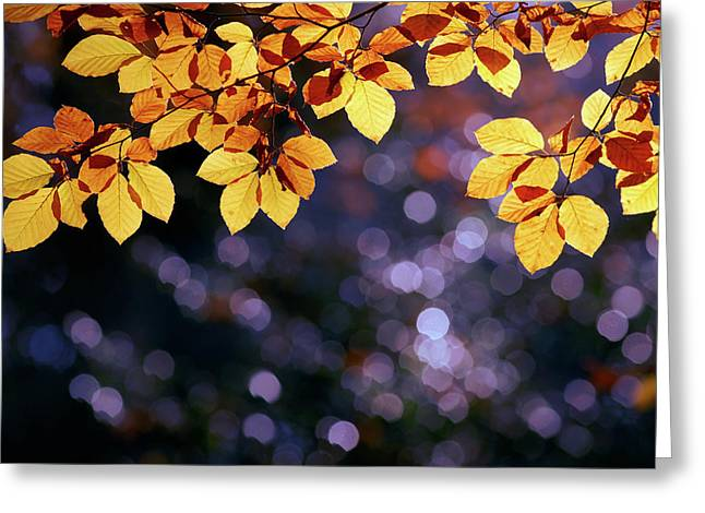 Autumn Party Greeting Card