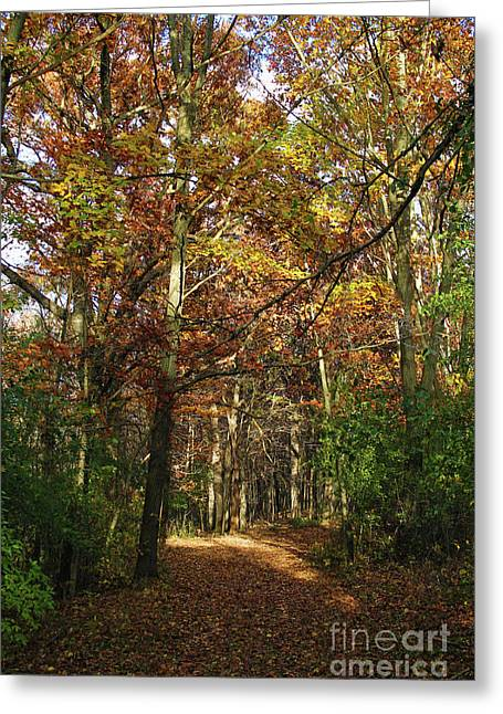 Autumn Path At St Croix Bluffs Greeting Card