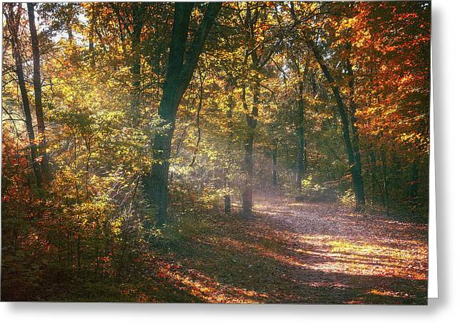 Autumn Path Greeting Card by Scott Norris