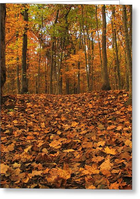 Autumn Path To The Forest Greeting Card