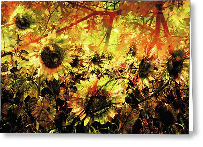 Autumn Greeting Card by Paul Drewry