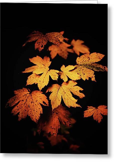Autumn Photo Greeting Card