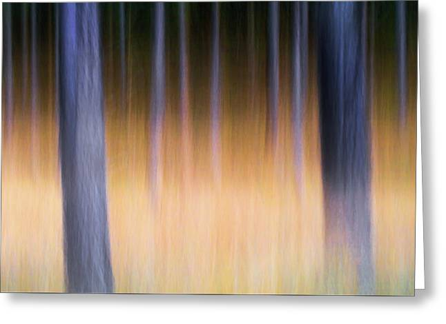 Greeting Card featuring the photograph Autumn Pine Forest Abstract by Dirk Ercken