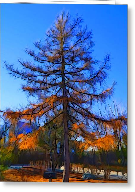 Autumn Pine Tree Greeting Card by Lilia D