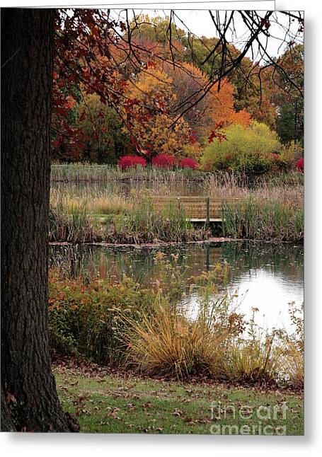 Autumn Pond In Maryland Greeting Card