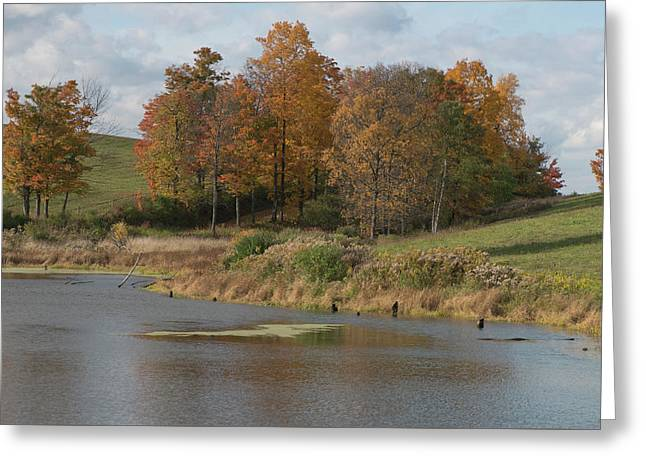 Greeting Card featuring the photograph Autumn Pond by Joshua House