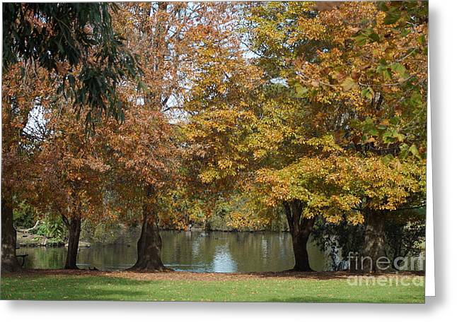 Fall Trees Greeting Cards - Autumn Pond Greeting Card by Merrin Jeff