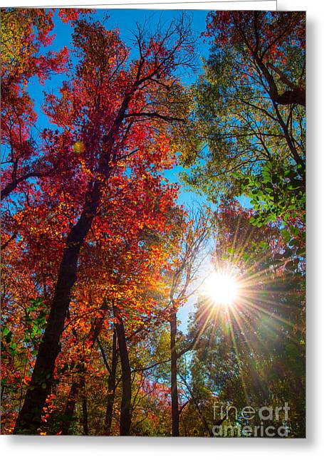 Autumn Pop Greeting Card by Sabrina Ramina